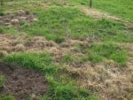 Spraying the Patch – Killing the Grass 2014