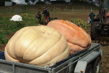 Two Pumpkins on Trailer