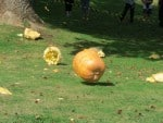 Downhill Pumpkin Rolling Video