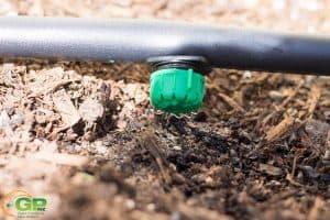 More Watering Set Up, Seedlings Update