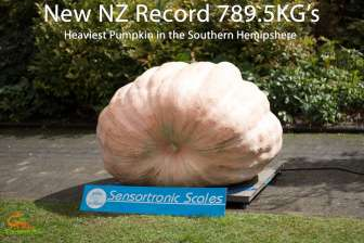 NZ record giant pumpkin 789.5kg