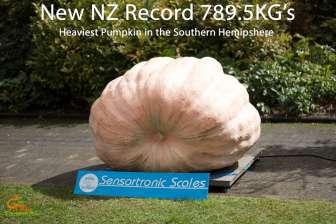 NZ record giant pumpkin 789.5kg