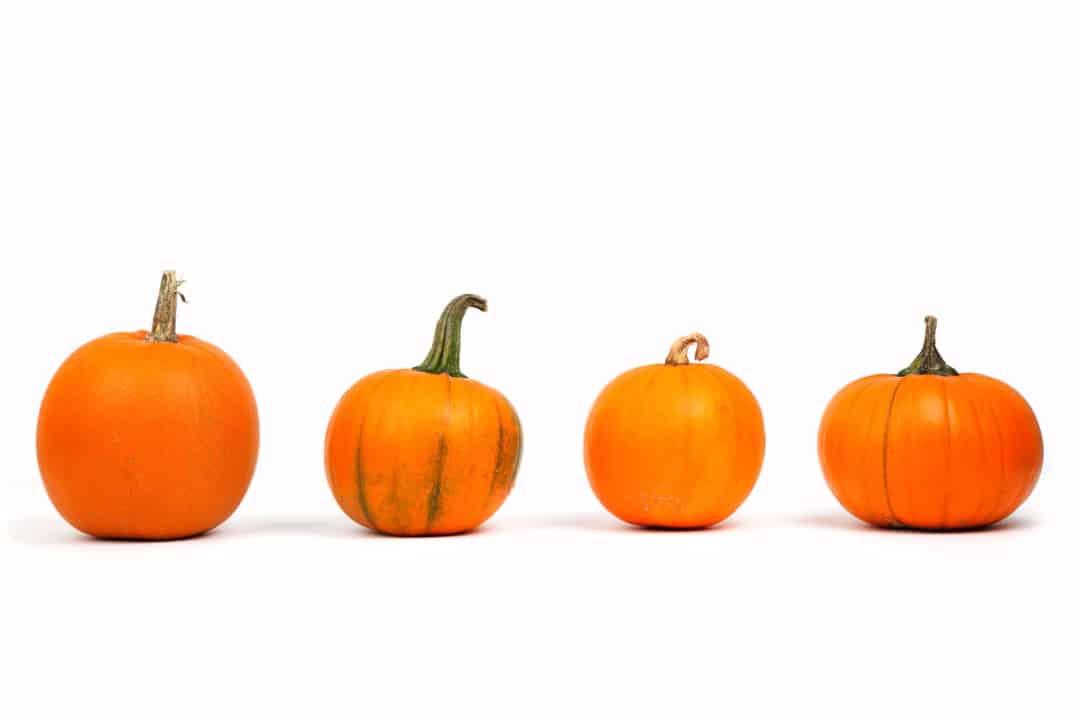 Miniature Pumpkin Seeds