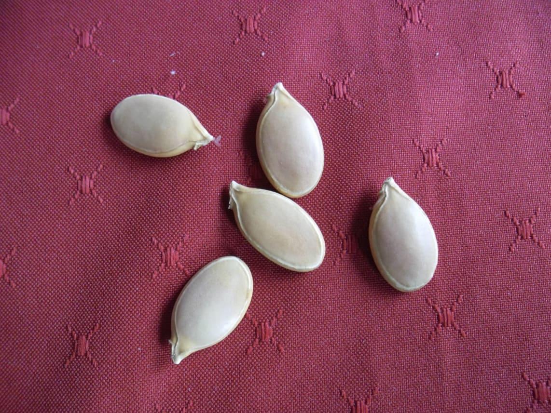 Giant Pumpkin Seed Selection – 2014 Season